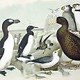 Plate LXXV Birds by Theodore Jasper 1881