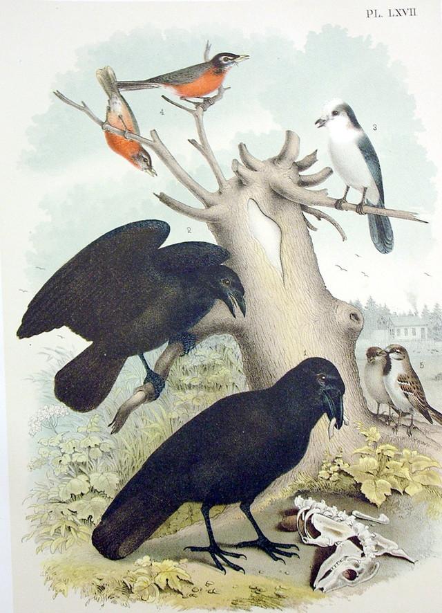 Plate LXVII Birds by Theodore Jasper 1881