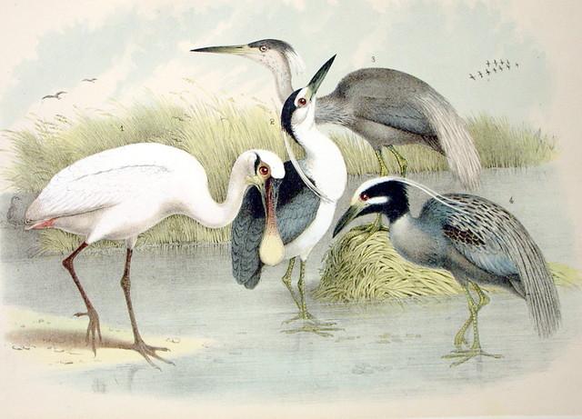 Plate LXXXXII Birds by Theodore Jasper 1881