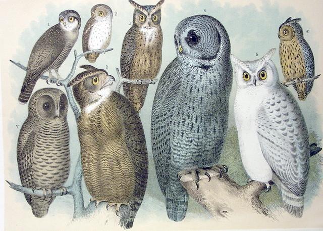 Plate CXIII Birds by Theodore Jasper 1881