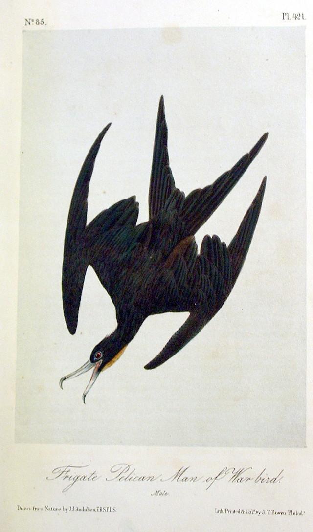 Frigate Pelican or Man of War